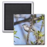 Blue-gray Gnatcatcher Magnet
