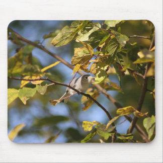 Blue Gray Gnatcatcher Mouse Pad