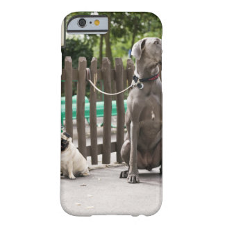 Blue Great Dane and pug dogs on leashes Barely There iPhone 6 Case