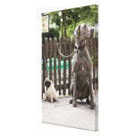 Blue Great Dane and pug dogs on leashes Canvas Prints