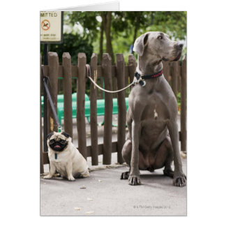 Blue Great Dane and pug dogs on leashes Card