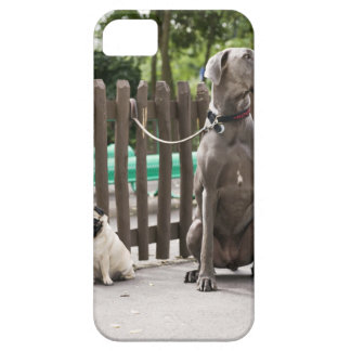 Blue Great Dane and pug dogs on leashes iPhone SE/5/5s Case