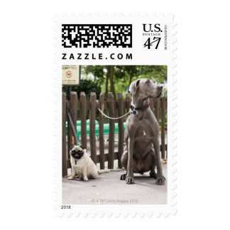 Blue Great Dane and pug dogs on leashes Postage