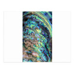 Blue green paua abalone shell detail post cards