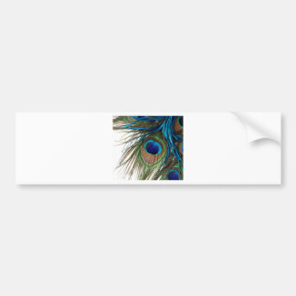 Blue Green Purple Exotic Peacock Feather Bumper Sticker