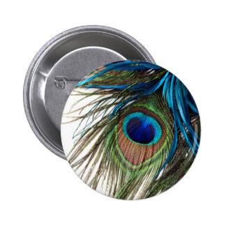 Blue Green Purple Exotic Peacock Feather Button
