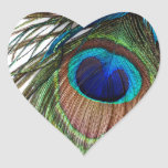 Blue Green Purple Exotic Peacock Feather Sticker