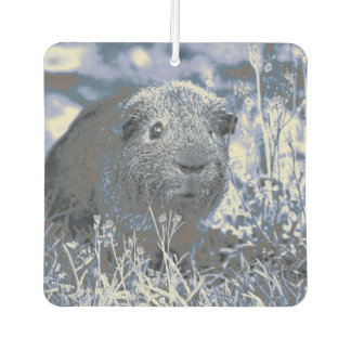 blue guinea pig air freshener