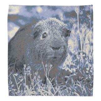 blue guinea pig bandana