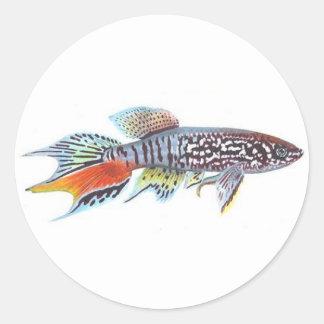 Blue Gularis Killifish Sticker