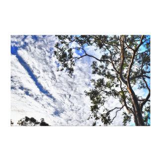 BLUE GUM TREE QUEENSLAND AUSTRALIA CANVAS PRINT