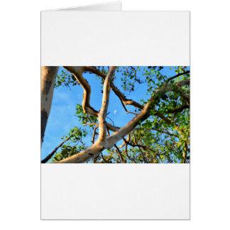 BLUE GUM TREE QUEENSLAND AUSTRALIA CARD