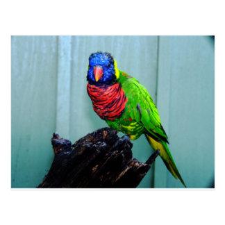 blue head parrot postcard