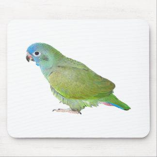 Blue Head Pionus Parrot Mouse Pad
