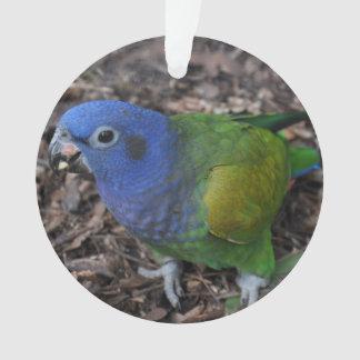 Blue Headed Amazon Parrot on ground