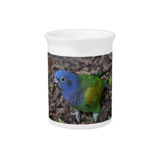 Blue Headed Amazon Parrot on ground Beverage Pitchers