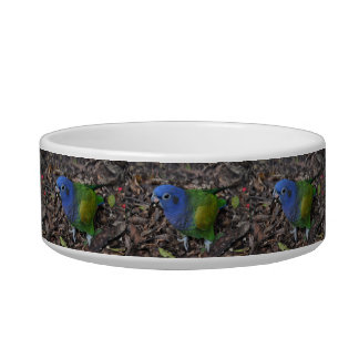 Blue Headed Amazon Parrot on ground Bowl
