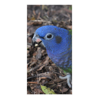 Blue Headed Amazon Parrot on ground Card