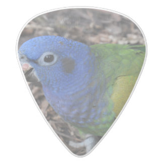 Blue Headed Amazon Parrot on ground White Delrin Guitar Pick