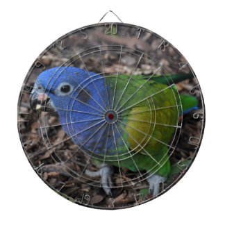 Blue Headed Amazon Parrot on ground Dartboards
