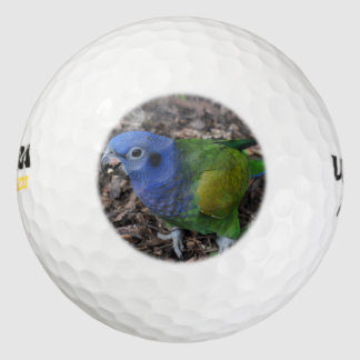 Blue Headed Amazon Parrot on ground Pack Of Golf Balls