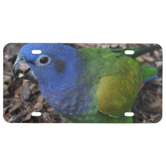 Blue Headed Amazon Parrot on ground License Plate