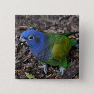 Blue Headed Amazon Parrot on ground Pinback Button