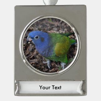 Blue Headed Amazon Parrot on ground Silver Plated Banner Ornament