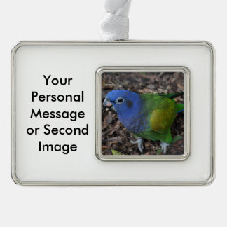 Blue Headed Amazon Parrot on ground Silver Plated Framed Ornament