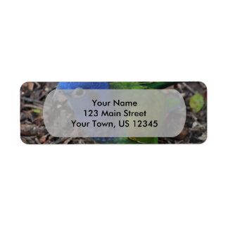 Blue Headed Amazon Parrot on ground Return Address Label