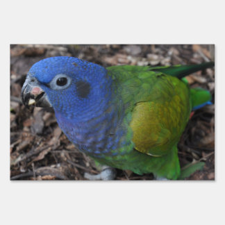 Blue Headed Amazon Parrot on ground Sign