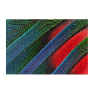 Blue Headed Parrot Feather Design Acrylic Print