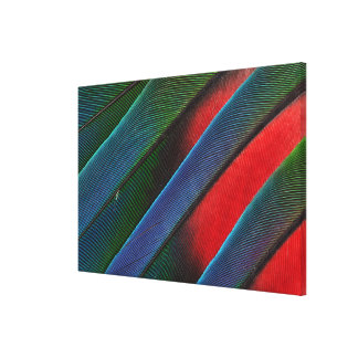 Blue Headed Parrot Feather Design Canvas Print