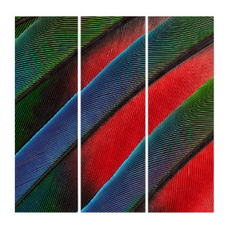 Blue Headed Parrot Feather Design Triptych