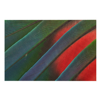Blue Headed Parrot Feather Design Wood Wall Art