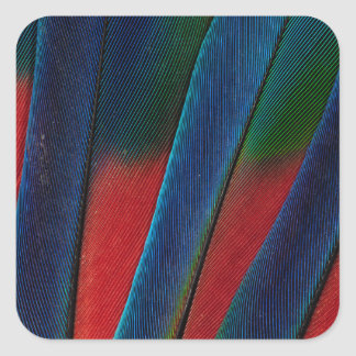 Blue-Headed Parrot Feather Detail Square Sticker