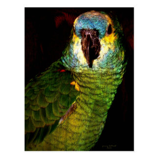 Blue Headed Parrot Postcard