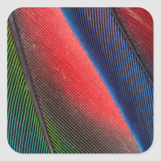 Blue-headed Pionus feathers Square Sticker