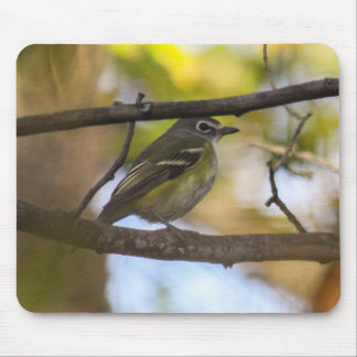 Blue-headed Vireo Mouse Pad