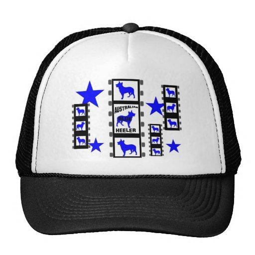 Blue Heeler Movie Star On Film Hat