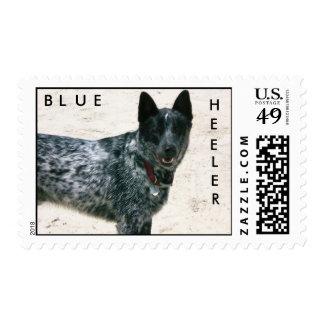 Blue Heeler Postage Stamp