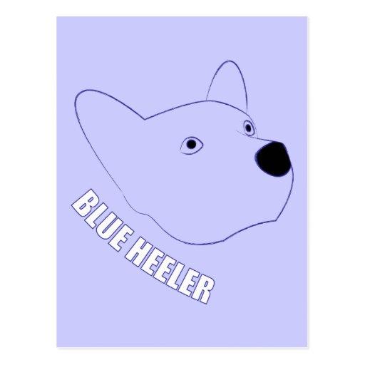 Blue Heeler Postcard