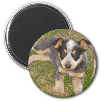 Blue Heeler Puppy Refrigerator Magnets