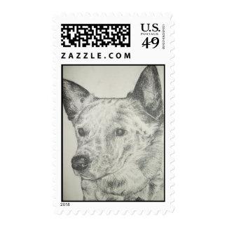 Blue Heeler Stamps