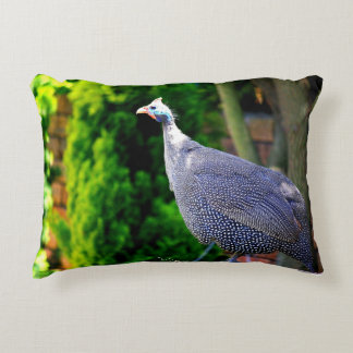 Blue Helmeted Guinea Fowl standing in the sun Accent Pillow