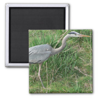 Blue Heron 2 Inch Square Magnet