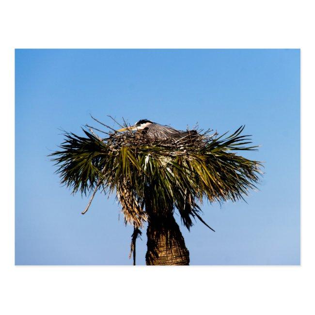 Blue Heron Bird Nest Tree