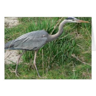 Blue Heron Card