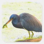 Blue Heron Having Lunch Square Sticker