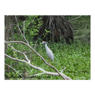 Blue Heron in Draught Poster